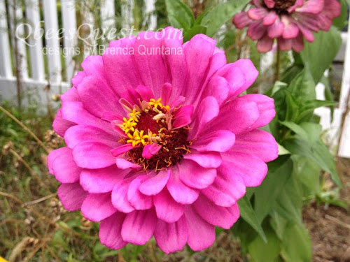 Friday Finds, Zinnia Inspriation, Take Two